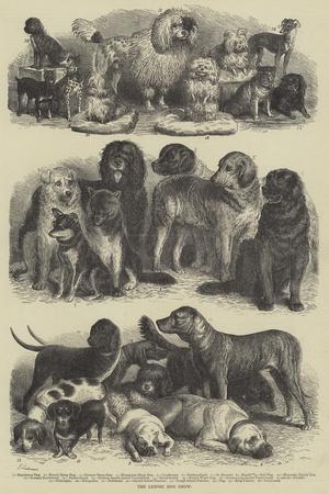 https://imgc.artprintimages.com/img/print/the-leipsic-dog-show_u-l-pvxt0v0.jpg?p=0