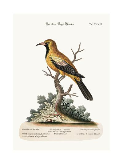 The Lesser Bonana Bird, 1749-73-George Edwards-Giclee Print