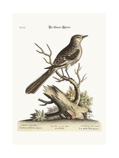 The Lesser Mock-Bird, 1749-73-George Edwards-Giclee Print