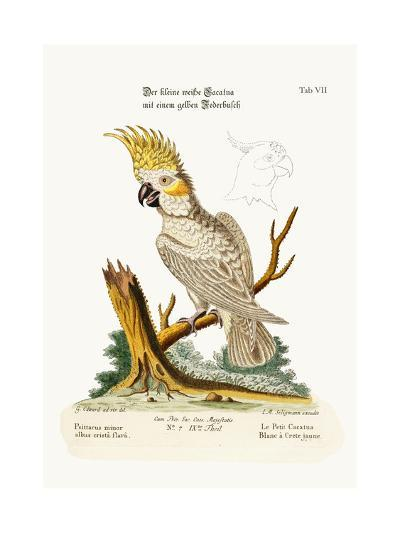 The Lesser White Cockatoo with a Yellow Crest, 1749-73-George Edwards-Giclee Print