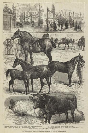 The Lincolnshire Agricultural Society's Show at Boston, Prize Animals--Giclee Print