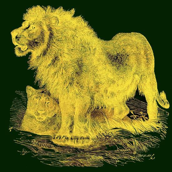 The Lion, Illustration from J. G. Wood's 'Illustrated Natural History', Published C.1850-English-Giclee Print