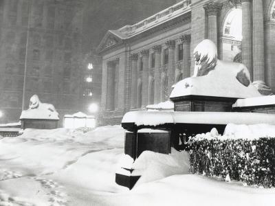 The Lion Statues at the New York Public Library Covered with Snow During the Record Snowfall--Photo
