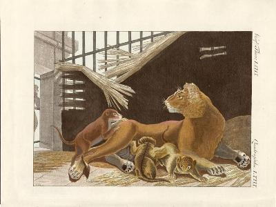 The Lioness and Her Cubs--Giclee Print