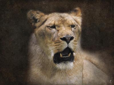 The Lioness Portrait-Jai Johnson-Giclee Print