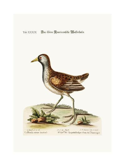 The Little American Water Hen, 1749-73-George Edwards-Giclee Print
