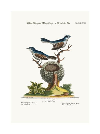 The Little Blue-Grey Flycatchers, Cock and Hen, 1749-73-George Edwards-Giclee Print