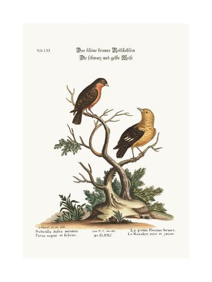 The Little Brown Bullfinch, the Black and Yellow Manakyn, 1749-73-George Edwards-Giclee Print