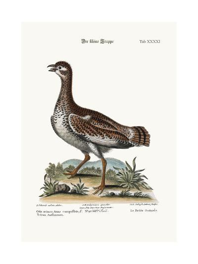The Little Bustard, 1749-73-George Edwards-Giclee Print
