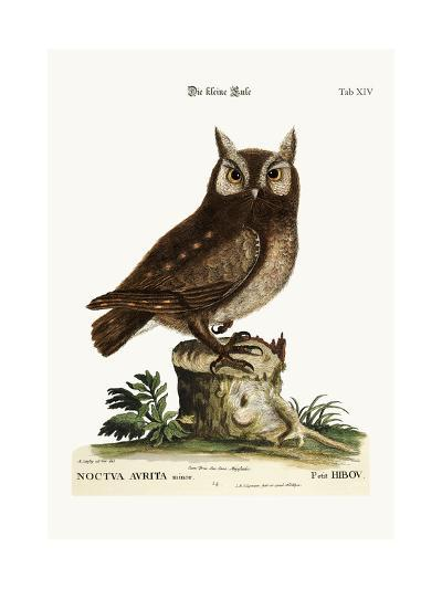 The Little Owl, 1749-73-Mark Catesby-Giclee Print