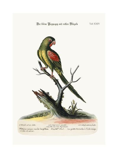 The Little Red-Winged Parrakeet, 1749-73-George Edwards-Giclee Print