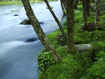 The Little River Rushing Past River Banks Lined with Birch Trees-Darlyne A^ Murawski-Photographic Print