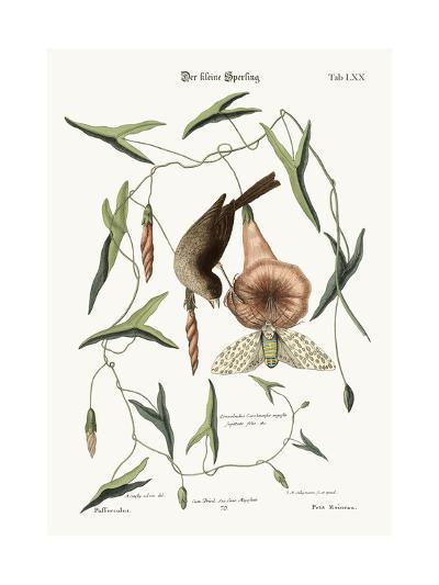 The Little Sparrow, 1749-73-Mark Catesby-Giclee Print