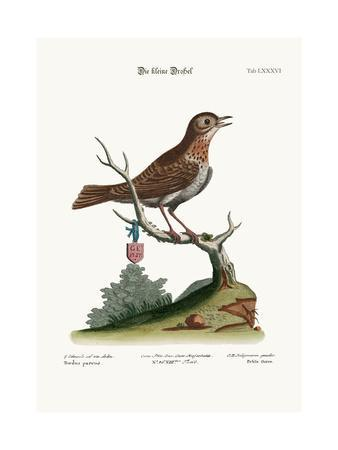 The Little Thrush, 1749-73-George Edwards-Giclee Print