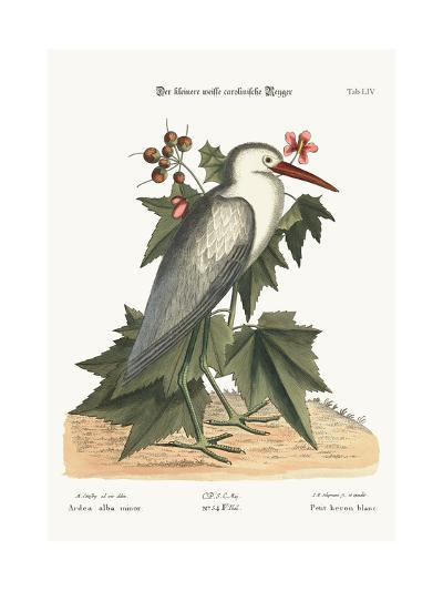 The Little White Heron, 1749-73-Mark Catesby-Giclee Print
