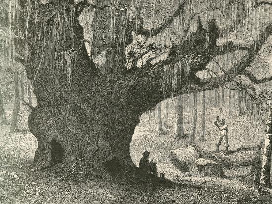 The Live Oak-Henry Linton-Giclee Print