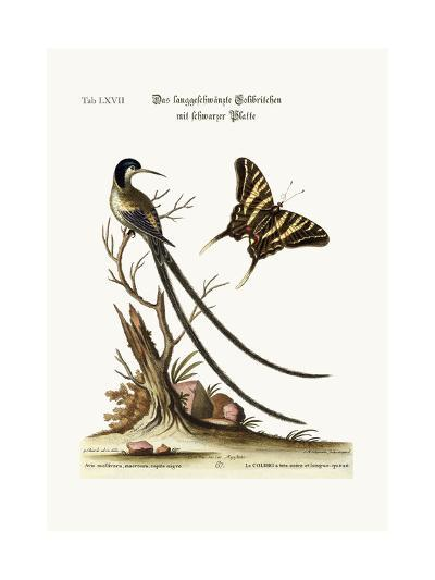 The Long-Tailed Black-Capped Hummingbird, 1749-73-George Edwards-Giclee Print