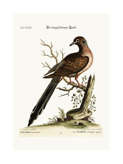 The Long-Tailed Dove, 1749-73-George Edwards-Giclee Print