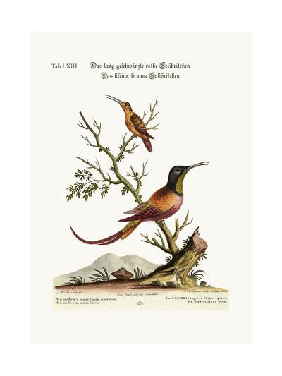 The Long-Tailed Red Hummingbird. the Little Brown Hummingbird, 1749-73-George Edwards-Giclee Print
