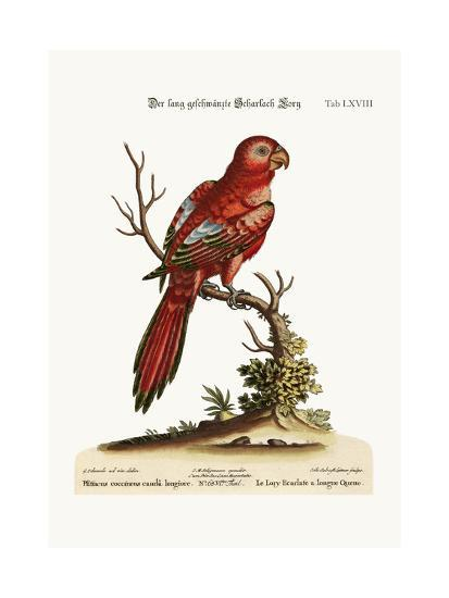 The Long-Tailed Scarlet Lory, 1749-73-George Edwards-Giclee Print