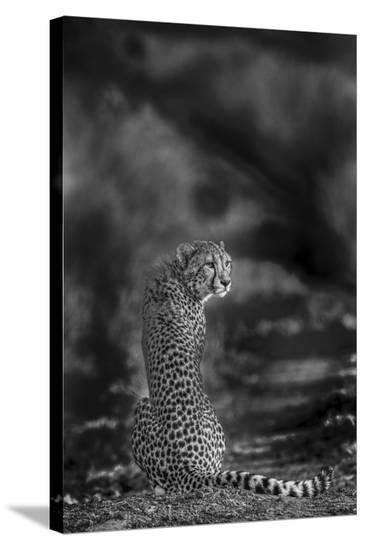 The Look Back-Jaco Marx-Stretched Canvas Print