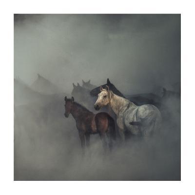 The Lost Horses-Huseyin Ta?k?n-Giclee Print
