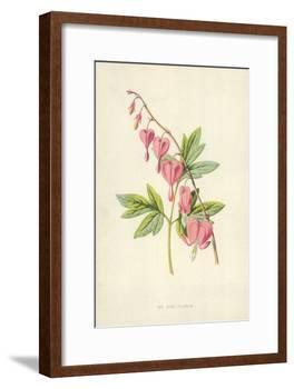 The Lyre Flower-Frederick Edward Hulme-Framed Giclee Print