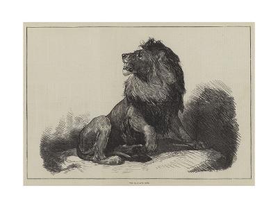 The Maccarte Lion--Giclee Print