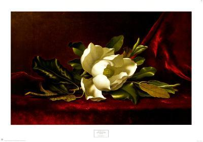 The Magnolia Flower-Martin Johnson Heade-Art Print