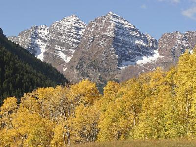 The Majestic Maroon Bells are Framed by Aspen and Evergreen Trees-Charles Kogod-Photographic Print