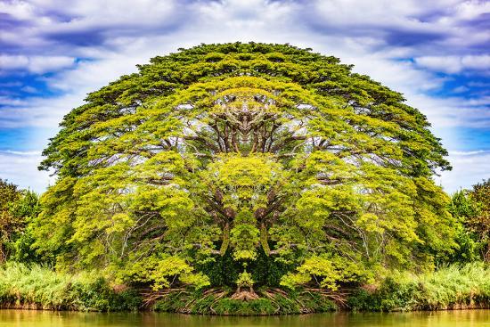 The Majestic Tree-Philippe Sainte-Laudy-Photographic Print