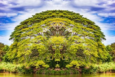 https://imgc.artprintimages.com/img/print/the-majestic-tree_u-l-q1elv6g0.jpg?p=0