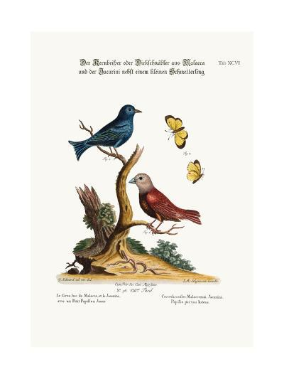 The Malacca Gros-Beak, the Jacarini, and the Small Yellow Butterfly, 1749-73-George Edwards-Giclee Print