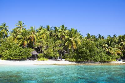 https://imgc.artprintimages.com/img/print/the-maldives-sea-palms-h-tte-hut_u-l-q11vswo0.jpg?p=0