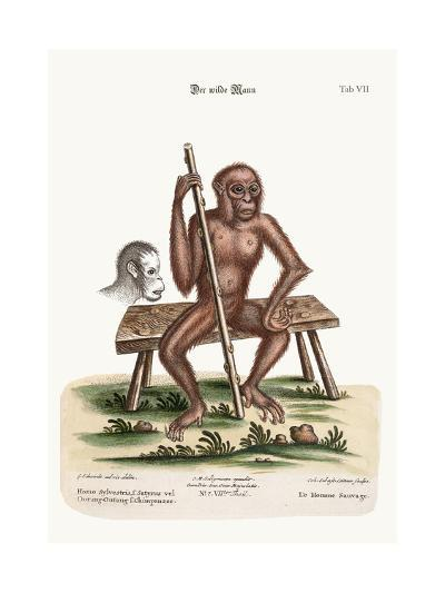 The Man of the Woods, 1749-73-George Edwards-Giclee Print