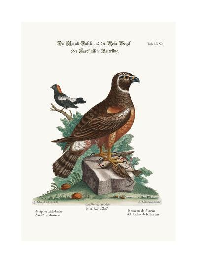 The Marsh-Hawk, and the Reed-Birds, 1749-73-George Edwards-Giclee Print