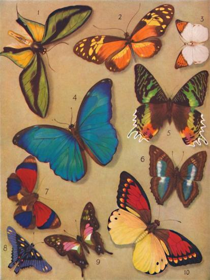 'The Marvellous Colour of the Butterflies', 1935-Unknown-Giclee Print