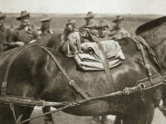 The mascot of the Anzacs, Somme campaign, France, World War I, 1916-Unknown-Photographic Print