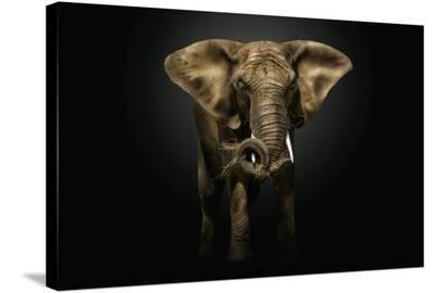 The Master-Pedro Jarque-Stretched Canvas Print