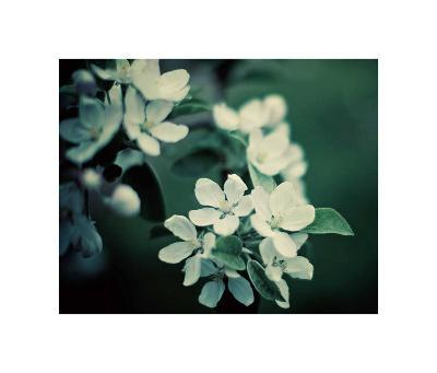 The Midnight Garden II-Irene Suchocki-Art Print