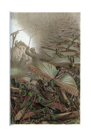https://imgc.artprintimages.com/img/print/the-migratory-locust-by-alfred-edmund-brehm_u-l-puck360.jpg?p=0