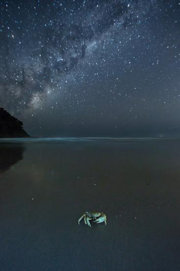 The Milky Way Above a Crab on a Beach-Alex Saberi-Photographic Print