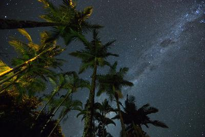 The Milky Way Above the Atlantic Rainforest Jungle and Palm Trees-Alex Saberi-Photographic Print