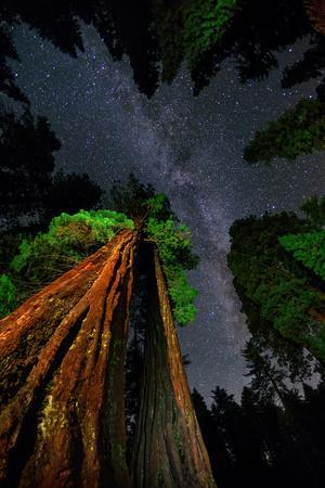 https://imgc.artprintimages.com/img/print/the-milky-way-above-towering-giant-sequoia-trees-some-of-the-largest-and-tallest-trees-on-earth_u-l-pu6sm30.jpg?p=0