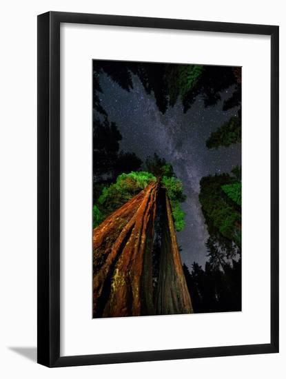The Milky Way Above Towering Giant Sequoia Trees, Some of the Largest and Tallest Trees on Earth-Babak Tafreshi-Framed Photographic Print