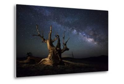 The Milky Way and a Dead Bristlecone Pine Tree in the White Mountains, California