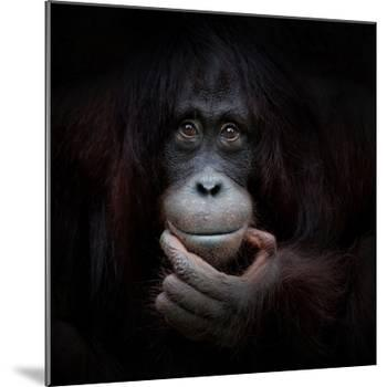 The Mirror Image-Antje Wenner-Braun-Mounted Photographic Print