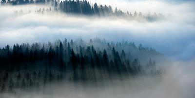 The Mist-Bjorn Wennerwald-Giclee Print