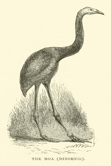 The Moa, Dinornis--Giclee Print