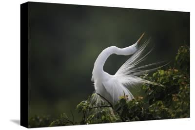 The Moment You Will Never Forget!-David H Yang-Stretched Canvas Print